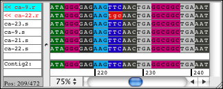 Looking at the bases of sequences with an amino acid based color scheme as background